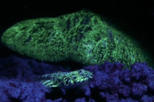 Fluorescence Diving フローダイビング⑯