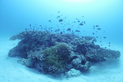 水納島 ポートサイド