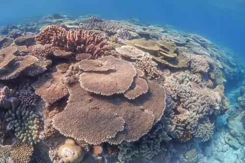 水納島 サンゴ礁
