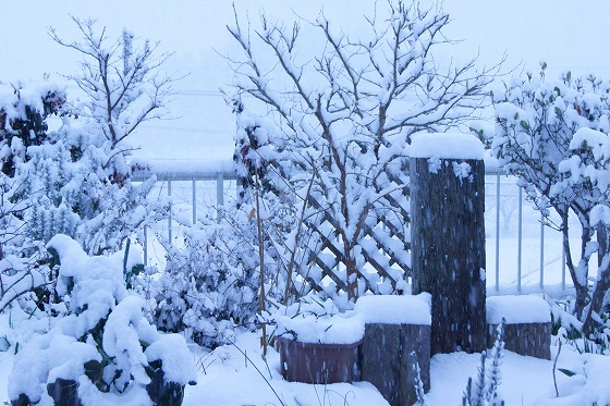 180125雪の朝0702