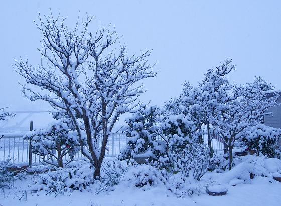 180125雪の朝0704