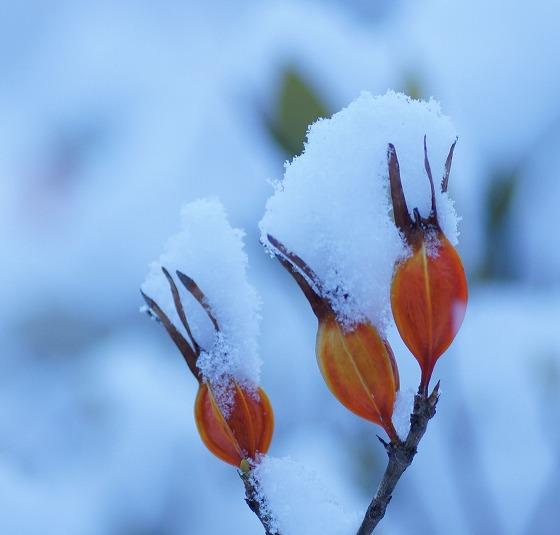 180125雪の朝0715