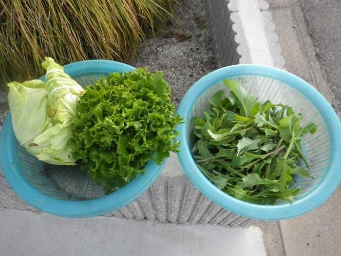 収穫18_03_23