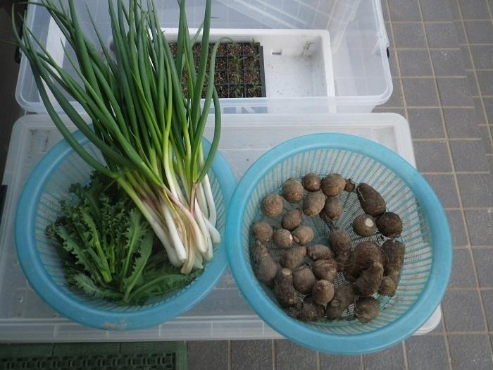 収穫18_03_25