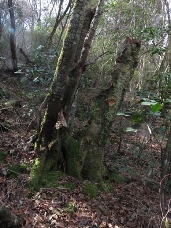石割岳 2018-03-24 044