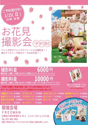 FREEWAN様 POP 春用-01-01_preview