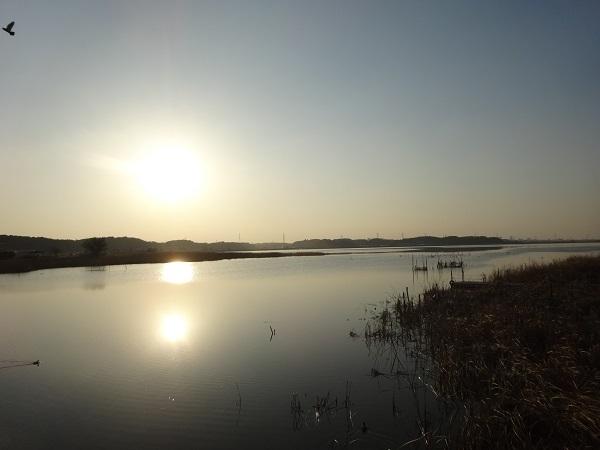 20180121利根運河 (7)