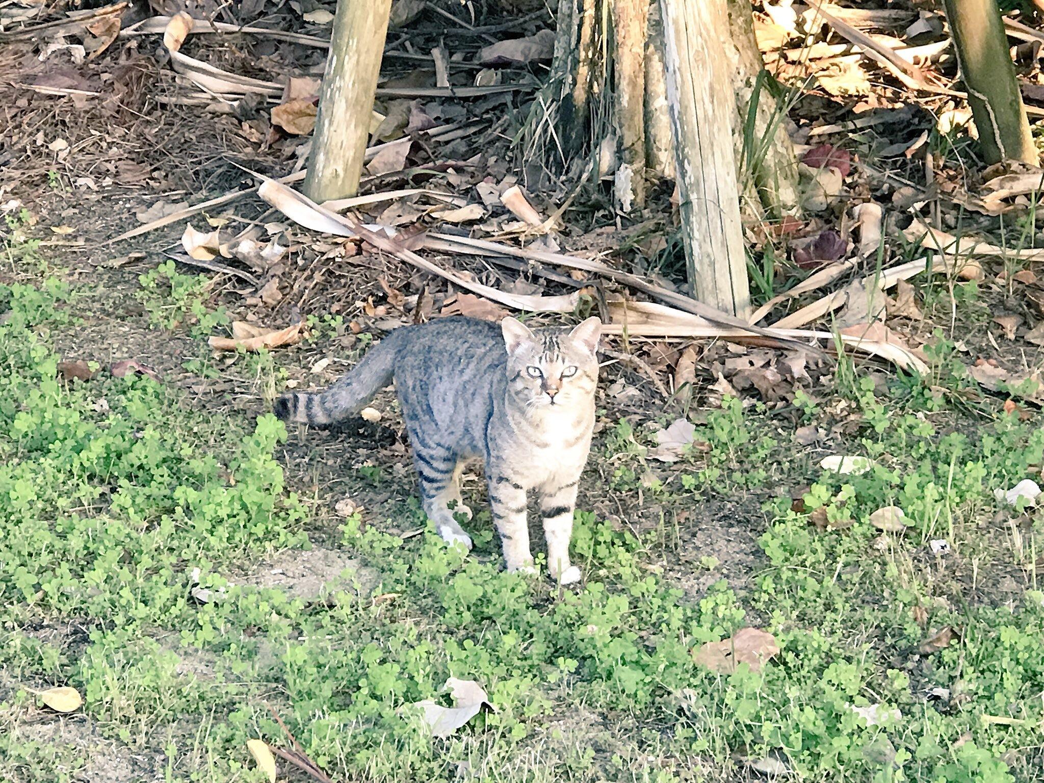 201803沖縄伊芸猫2