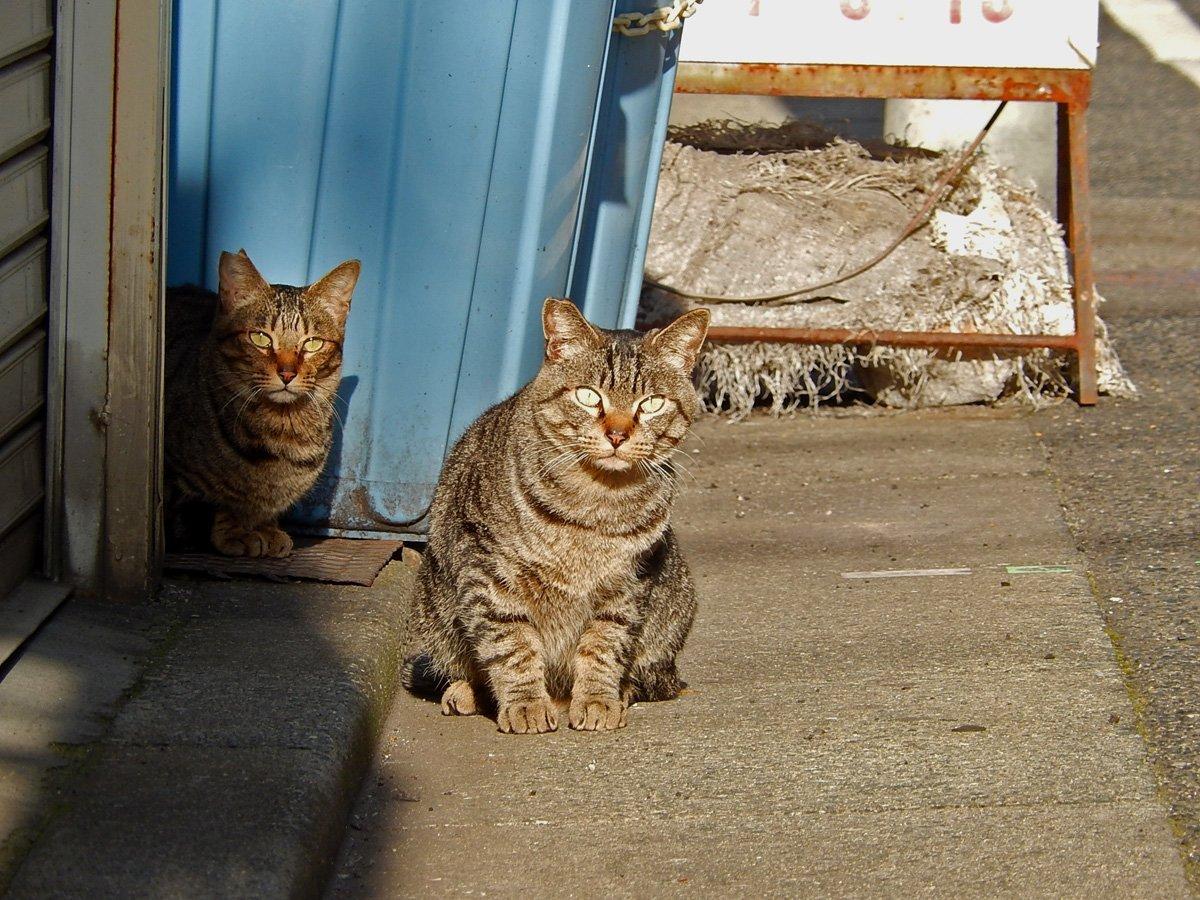 怪訝な顔の猫