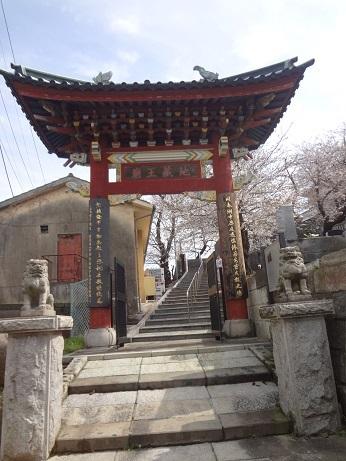 中華義荘櫻5