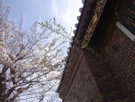 中華義荘櫻1