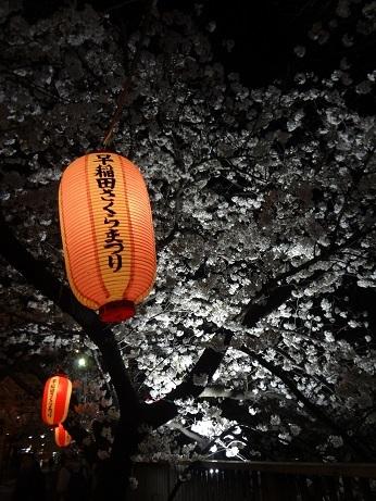 早稲田桜祭