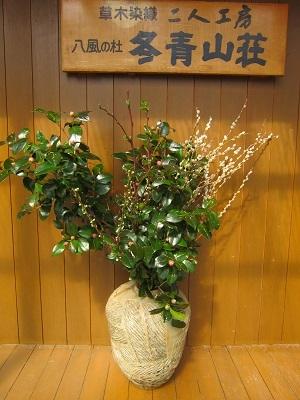 椿雪柳苺木 (1)-2