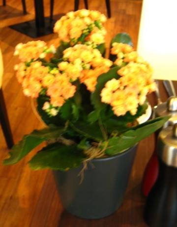 チューリッヒの花①左90度回転
