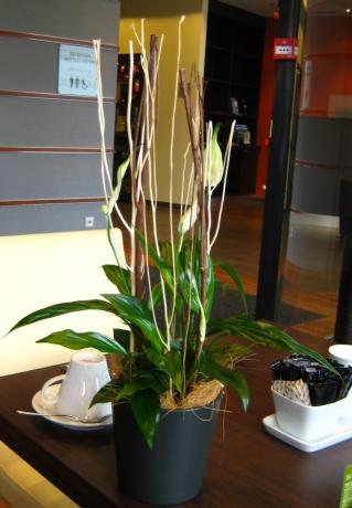 チューリッヒの花②左90度回転