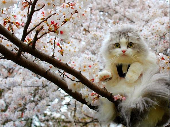 桜とにゃんこ