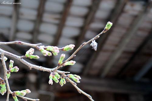 春のお社4