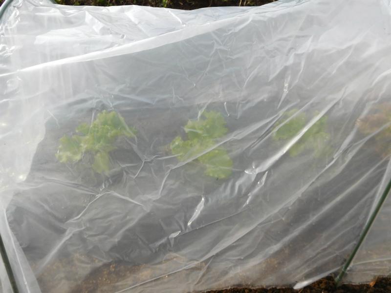 ss-葉物野菜