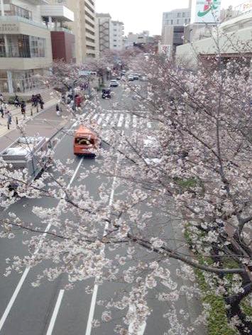 桜トンネル写真