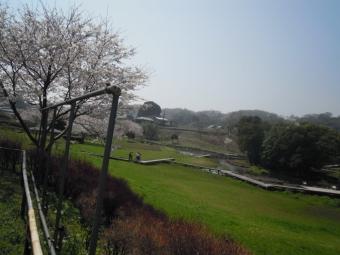 厳島湿生公園180328