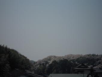 あそこも桜180328