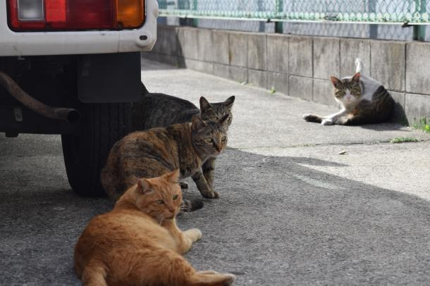 猫8,9,10,11