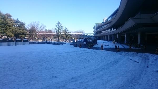 雪の東京競馬場