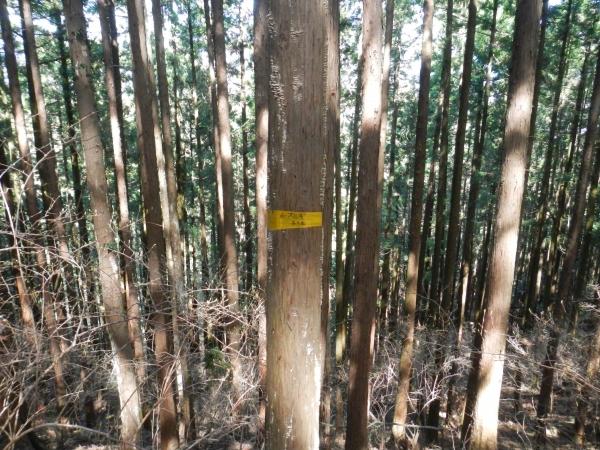天覚山・大高山 066