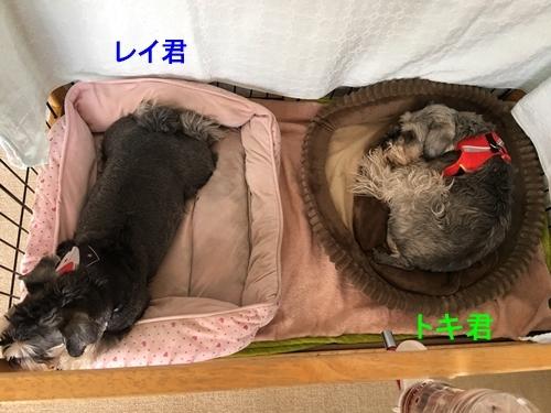 トキ君&レイ君2018年3月10日1