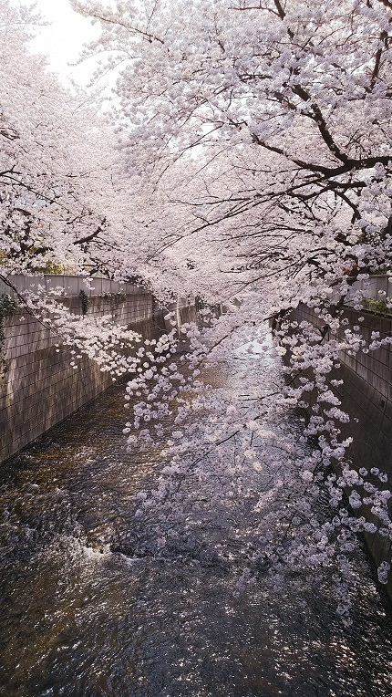 20180328川と桜