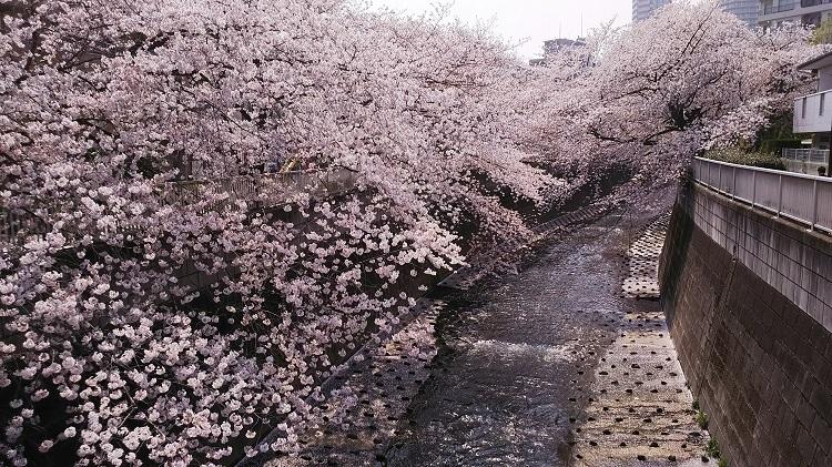 20180328川沿いの桜
