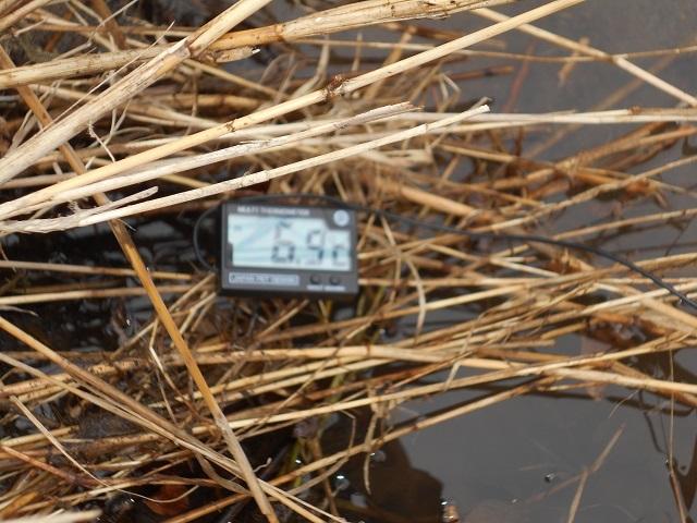 DSCN39770311家康地区水温.jpg