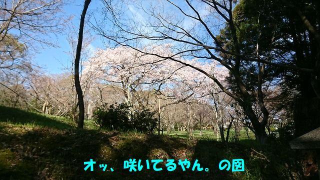 DSC_0781.jpg