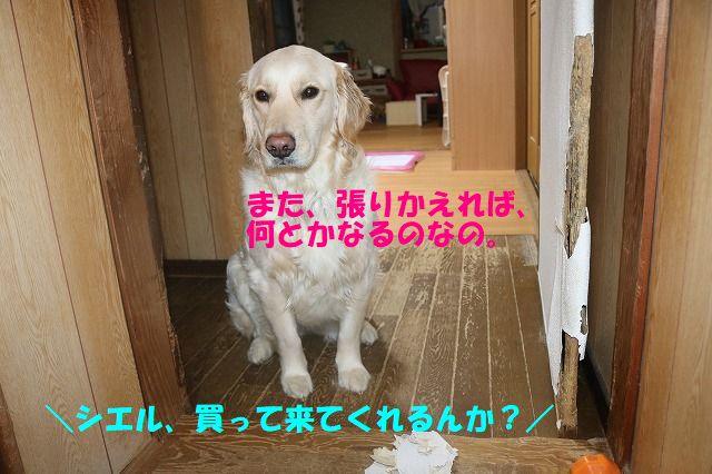 IMG_0110_201803221809429e7.jpg