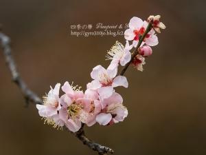 小石川植物園 B