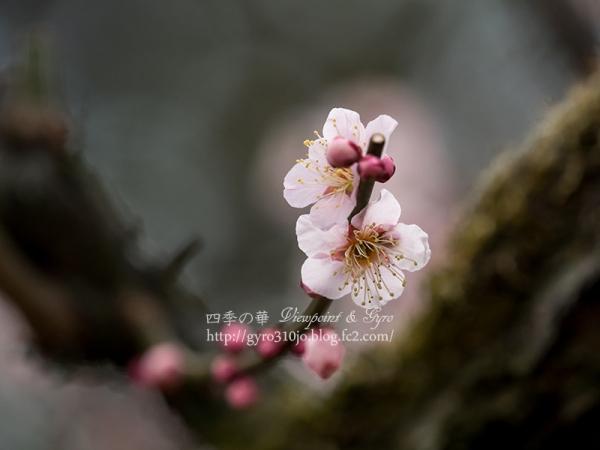 小石川植物園 A