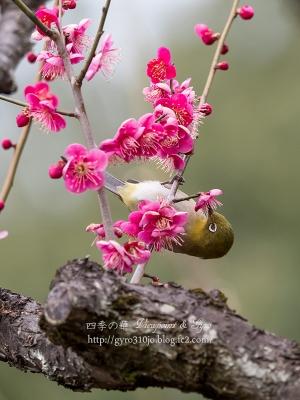 小石川植物園 E