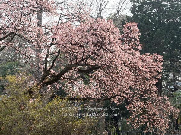 小石川植物園 J