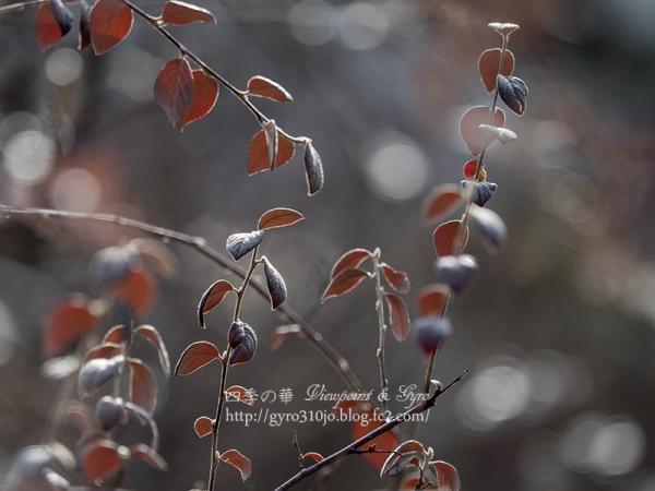 小石川植物園 K