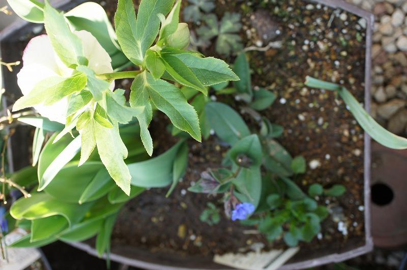 ホワイト糸ピコSS2018小花弁グリーンと紫 (1)