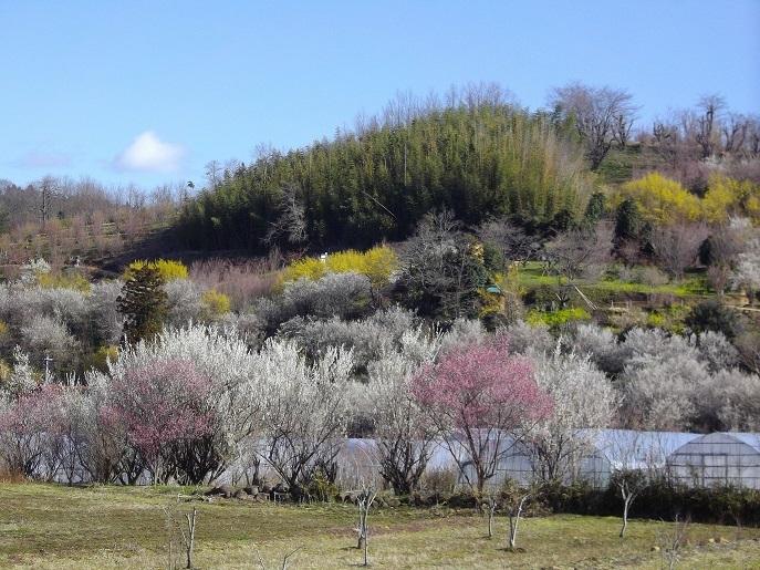 3月24日の花見山