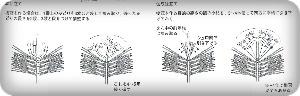 樹冠の作り方