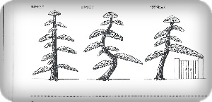 樹形仕立て