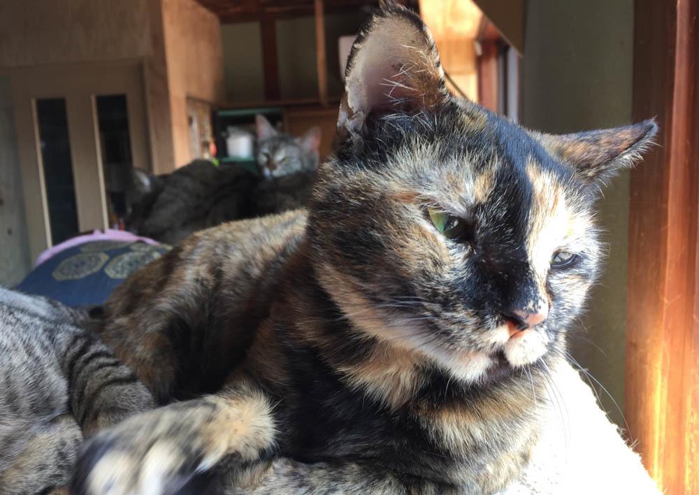 2サビ猫-1