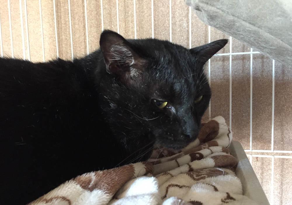 14黒猫-1