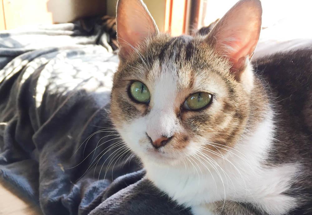 17キジ白猫-1