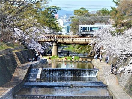 さくら夙川で桜と絡める。