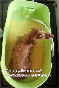 お湯洗い1
