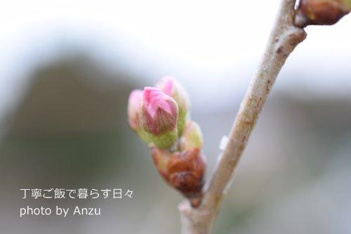 180307 桜