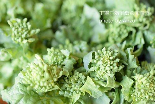 180313 菜の花